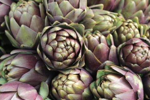 smart-art-flowers-roses-protea-fynbos-macro-poppy-59