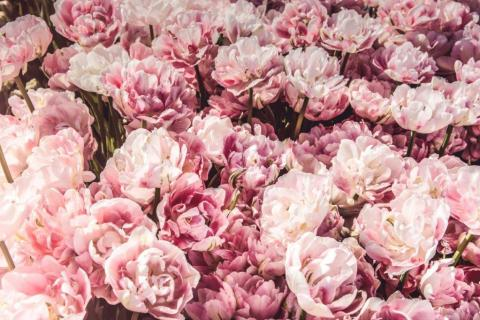 smart-art-flowers-roses-protea-fynbos-macro-poppy-63