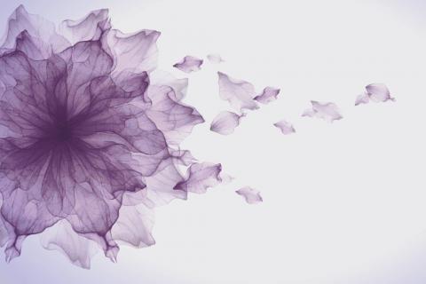 smart-art-flowers-roses-protea-fynbos-macro-poppy-64