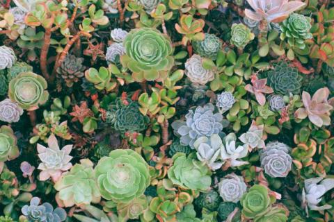smart-art-flowers-roses-protea-fynbos-macro-poppy-66