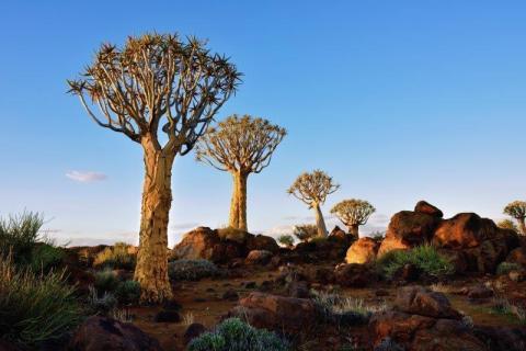 smart-art-landscapes-karoo-cape-town-stellenbosh-winelands-joh-34