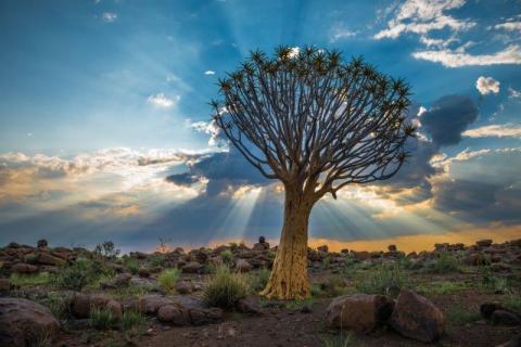 smart-art-landscapes-karoo-cape-town-stellenbosh-winelands-namibia-133