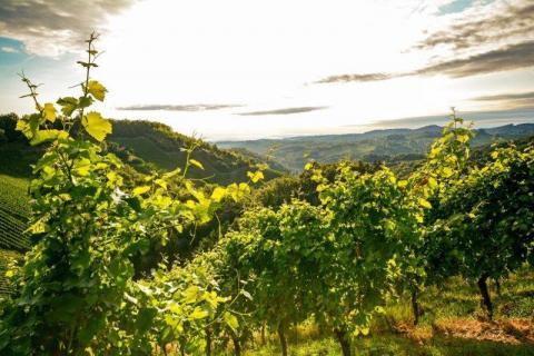 smart-art-landscapes-karoo-cape-town-stellenbosh-winelands-namibia-136