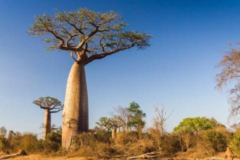 smart-art-landscapes-karoo-cape-town-stellenbosh-winelands-namibia-140
