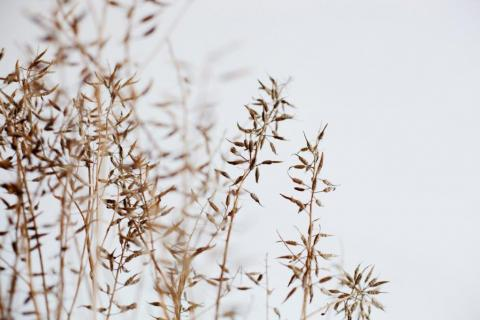 smart-art-wallpaper-design-Trend-2021-grass-neutral-beige-grey-soft-pantone-designs-31