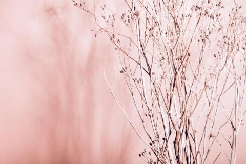 smart-art-wallpaper-design-Trend-2021-grass-neutral-beige-grey-soft-pantone-designs-33
