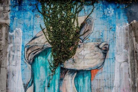 smart-art-kiddies-wallpaper-forest-22
