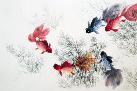 smart-art-kiddies-wallpaper-nemo-gold-fish-7