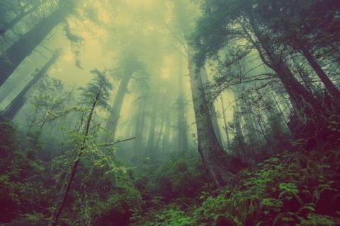 smart-art-trees-misty-forest-tree-trunks-sunlight-autum-winter-spring-summer-12