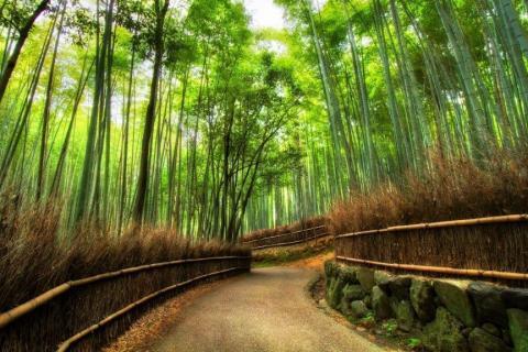 smart-art-trees-misty-forest-tree-trunks-sunlight-autum-winter-spring-summer-13