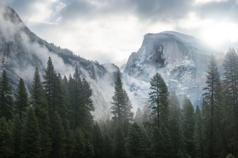 smart-art-trees-misty-forest-tree-trunks-sunlight-autum-winter-spring-summer-15