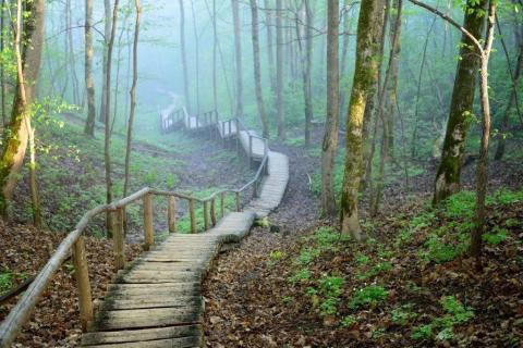 smart-art-trees-misty-forest-tree-trunks-sunlight-autum-winter-spring-summer-16