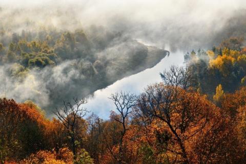 smart-art-trees-misty-forest-tree-trunks-sunlight-autum-winter-spring-summer-17