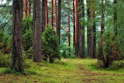 smart-art-trees-misty-forest-tree-trunks-sunlight-autum-winter-spring-summer-18