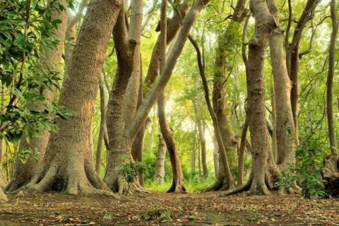 smart-art-trees-misty-forest-tree-trunks-sunlight-autum-winter-spring-summer-19