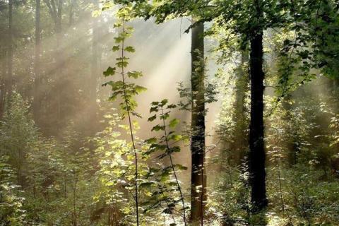 smart-art-trees-misty-forest-tree-trunks-sunlight-autum-winter-spring-summer-20
