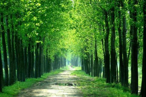 smart-art-trees-misty-forest-tree-trunks-sunlight-autum-winter-spring-summer-21