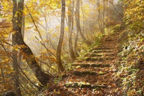 smart-art-trees-misty-forest-tree-trunks-sunlight-autum-winter-spring-summer-22