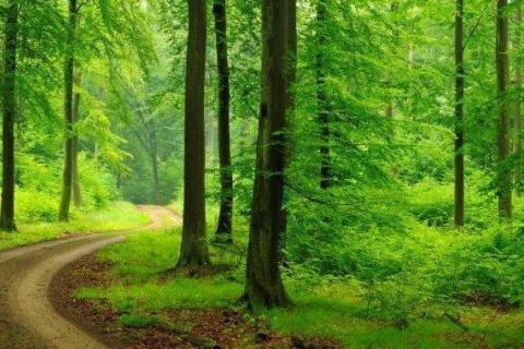 smart-art-trees-misty-forest-tree-trunks-sunlight-autum-winter-spring-summer-23