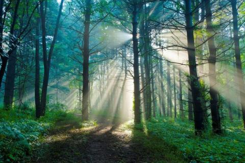 smart-art-trees-misty-forest-tree-trunks-sunlight-autum-winter-spring-summer-24