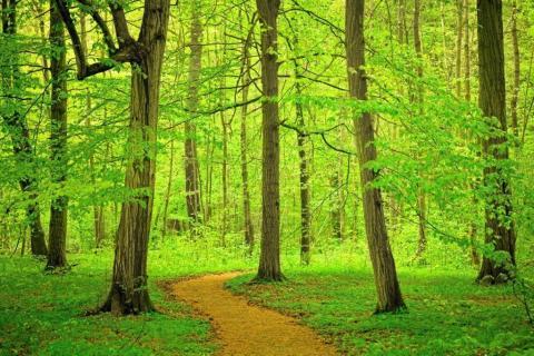 smart-art-trees-misty-forest-tree-trunks-sunlight-autum-winter-spring-summer-25