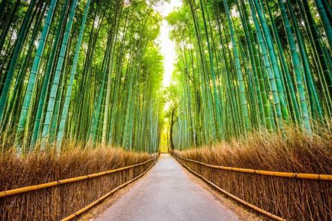 smart-art-trees-misty-forest-tree-trunks-sunlight-autum-winter-spring-summer-27