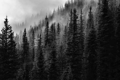 smart-art-trees-misty-forest-tree-trunks-sunlight-autum-winter-spring-summer-28