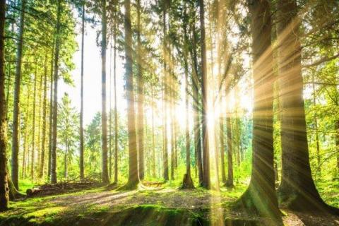smart-art-trees-misty-forest-tree-trunks-sunlight-autum-winter-spring-summer-29