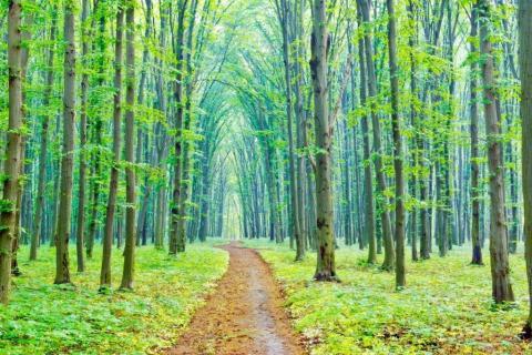 smart-art-trees-misty-forest-tree-trunks-sunlight-autum-winter-spring-summer-30
