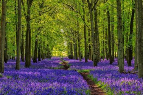 smart-art-trees-misty-forest-tree-trunks-sunlight-autum-winter-spring-summer-31