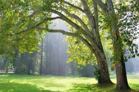 smart-art-trees-misty-forest-tree-trunks-sunlight-autum-winter-spring-summer-32