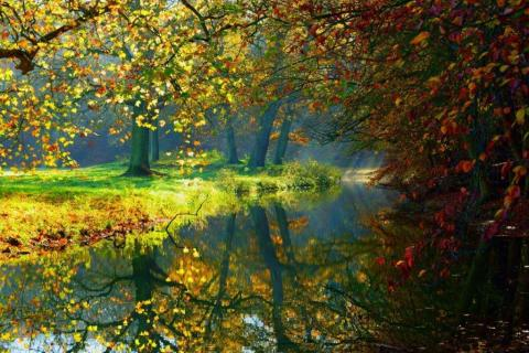 smart-art-trees-misty-forest-tree-trunks-sunlight-autum-winter-spring-summer-33