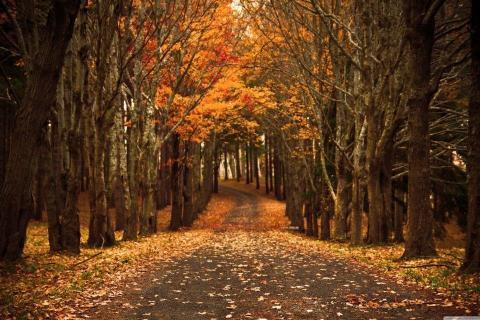 smart-art-trees-misty-forest-tree-trunks-sunlight-autum-winter-spring-summer-34