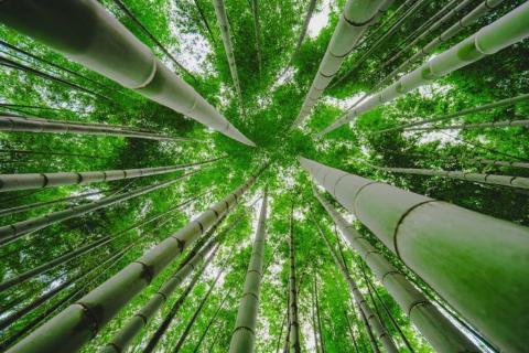 smart-art-trees-misty-forest-tree-trunks-sunlight-autum-winter-spring-summer-35