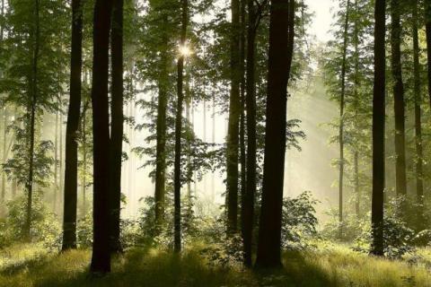 smart-art-trees-misty-forest-tree-trunks-sunlight-autum-winter-spring-summer-36