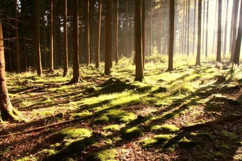 smart-art-trees-misty-forest-tree-trunks-sunlight-autum-winter-spring-summer-37
