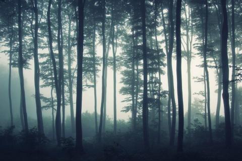 smart-art-trees-misty-forest-tree-trunks-sunlight-autum-winter-spring-summer-39
