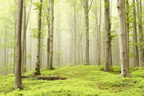 smart-art-trees-misty-forest-tree-trunks-sunlight-autum-winter-spring-summer-40