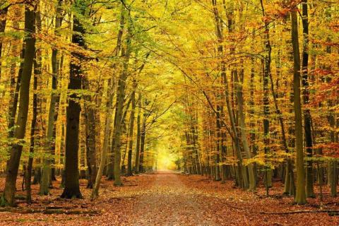 smart-art-trees-misty-forest-tree-trunks-sunlight-autum-winter-spring-summer-41