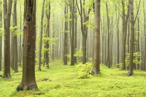 smart-art-trees-misty-forest-tree-trunks-sunlight-autum-winter-spring-summer-42