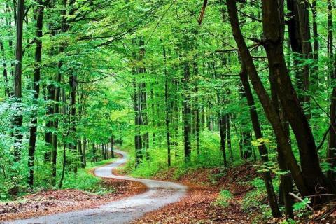 smart-art-trees-misty-forest-tree-trunks-sunlight-autum-winter-spring-summer-44