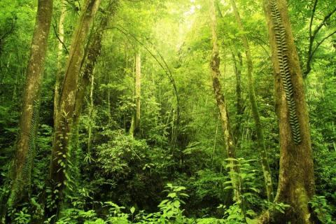 smart-art-trees-misty-forest-tree-trunks-sunlight-autum-winter-spring-summer-46