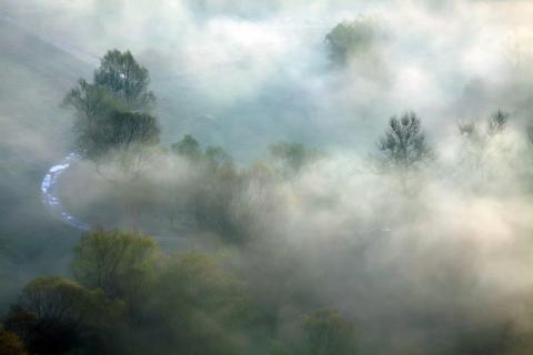 smart-art-trees-misty-forest-tree-trunks-sunlight-autum-winter-spring-summer-47