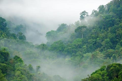 smart-art-trees-misty-forest-tree-trunks-sunlight-autum-winter-spring-summer-48