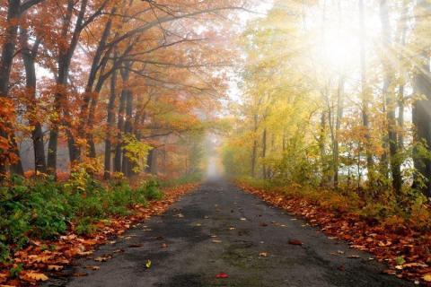 smart-art-trees-misty-forest-tree-trunks-sunlight-autum-winter-spring-summer-49
