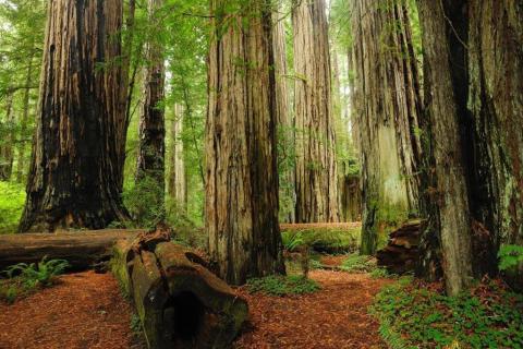 smart-art-trees-misty-forest-tree-trunks-sunlight-autum-winter-spring-summer-50