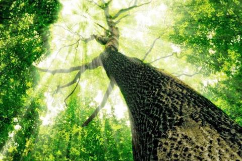 smart-art-trees-misty-forest-tree-trunks-sunlight-autum-winter-spring-summer-51