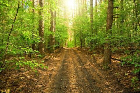 smart-art-trees-misty-forest-tree-trunks-sunlight-autum-winter-spring-summer-52