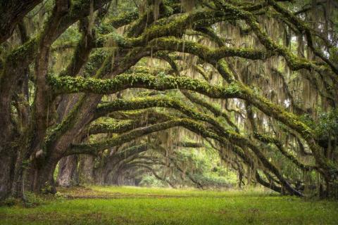 smart-art-trees-misty-forest-tree-trunks-sunlight-autum-winter-spring-summer-53