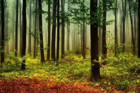 smart-art-trees-misty-forest-tree-trunks-sunlight-autum-winter-spring-summer-54